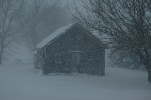 Snow falling between my home and the 1890s-era schoolhouse on my property