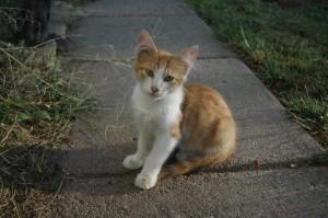 Barney as a kitten