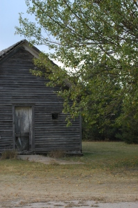 A mulberry tree next to the Old Schoolhouse at Safe Haven Farm, Haven, KS