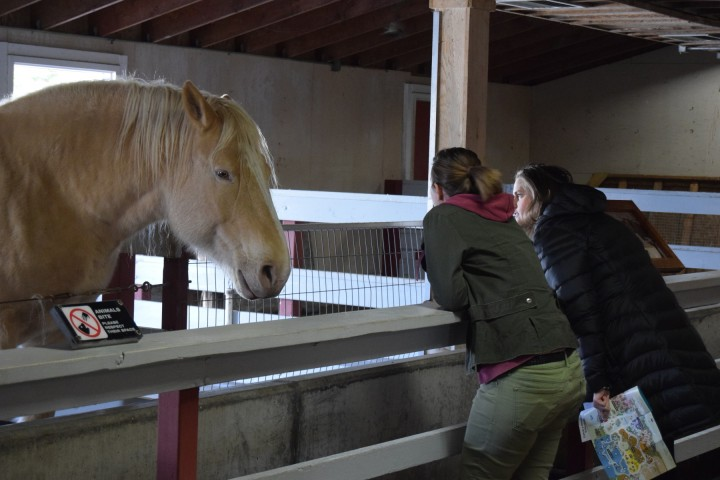 Mona and Katie having a serious conversation with Shasta the draft horse